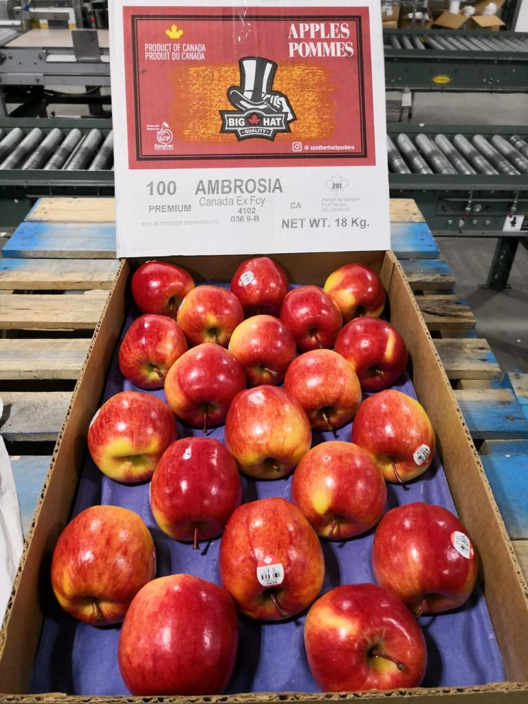 Canadian Ambrosia Apples