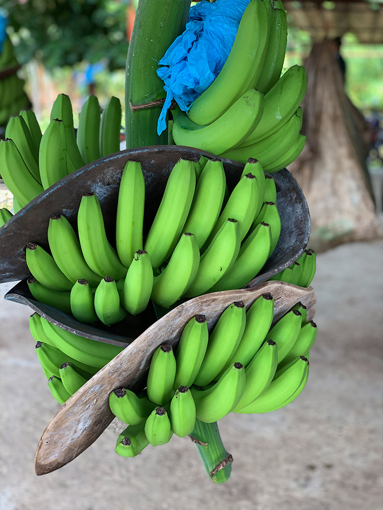 Cavendish-Banana-01.jpg