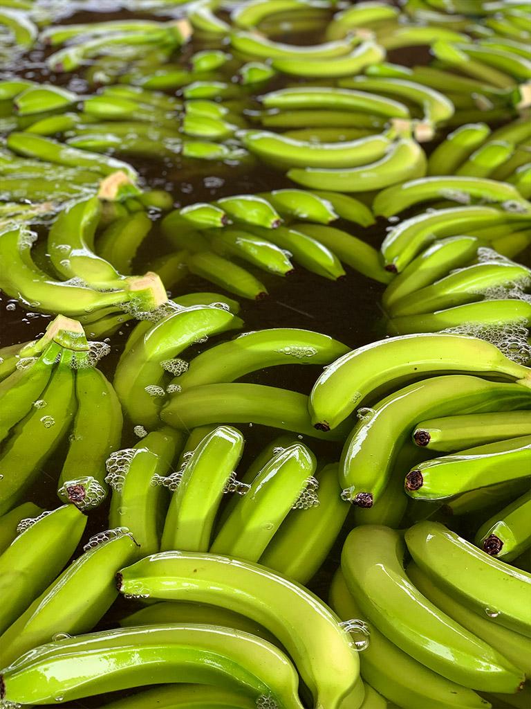 Cavendish-Banana-02.jpg