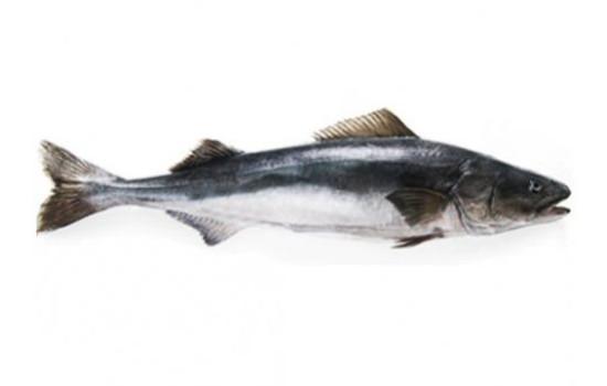 Fresh Black Cod / Sablefish Freya Produce
