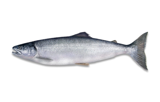 Fresh Salmon Freya Produce