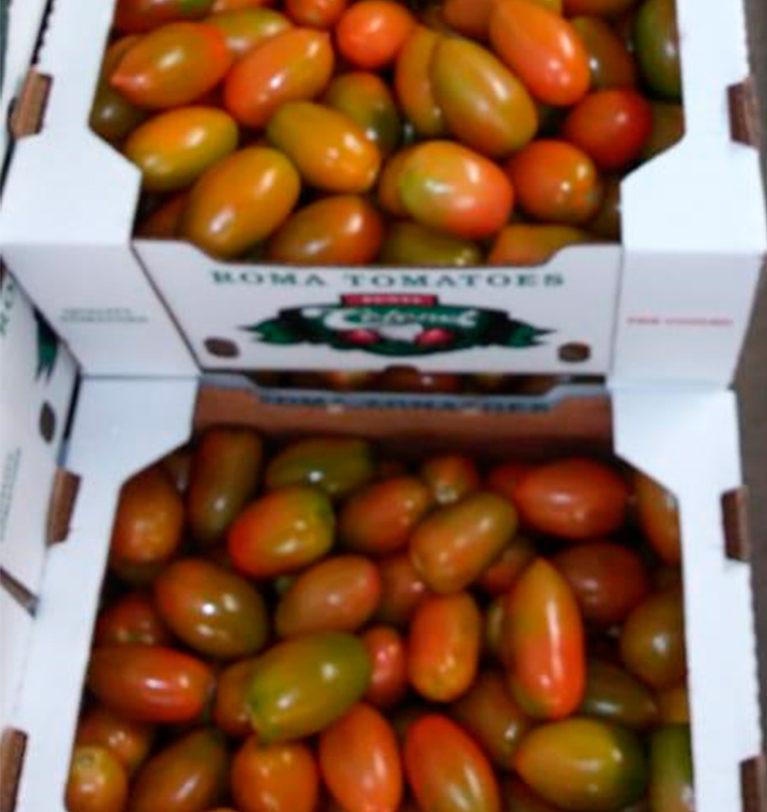 We grow mexican Roma tomatoes in Baja California