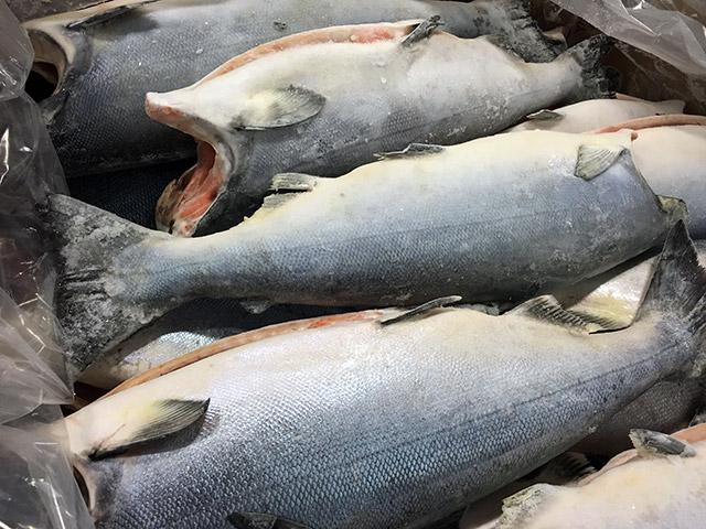 Sockeye Salmon Whole fish