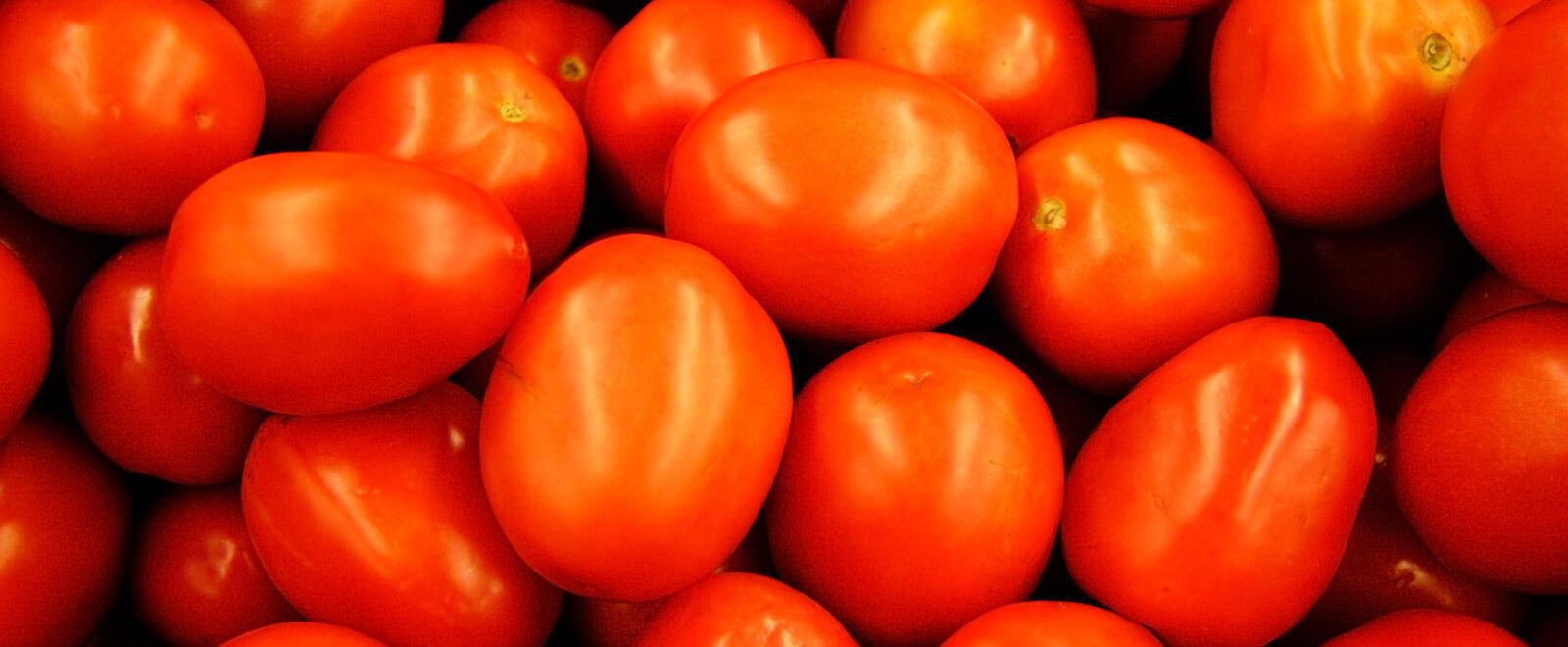 Freya Tomatoes