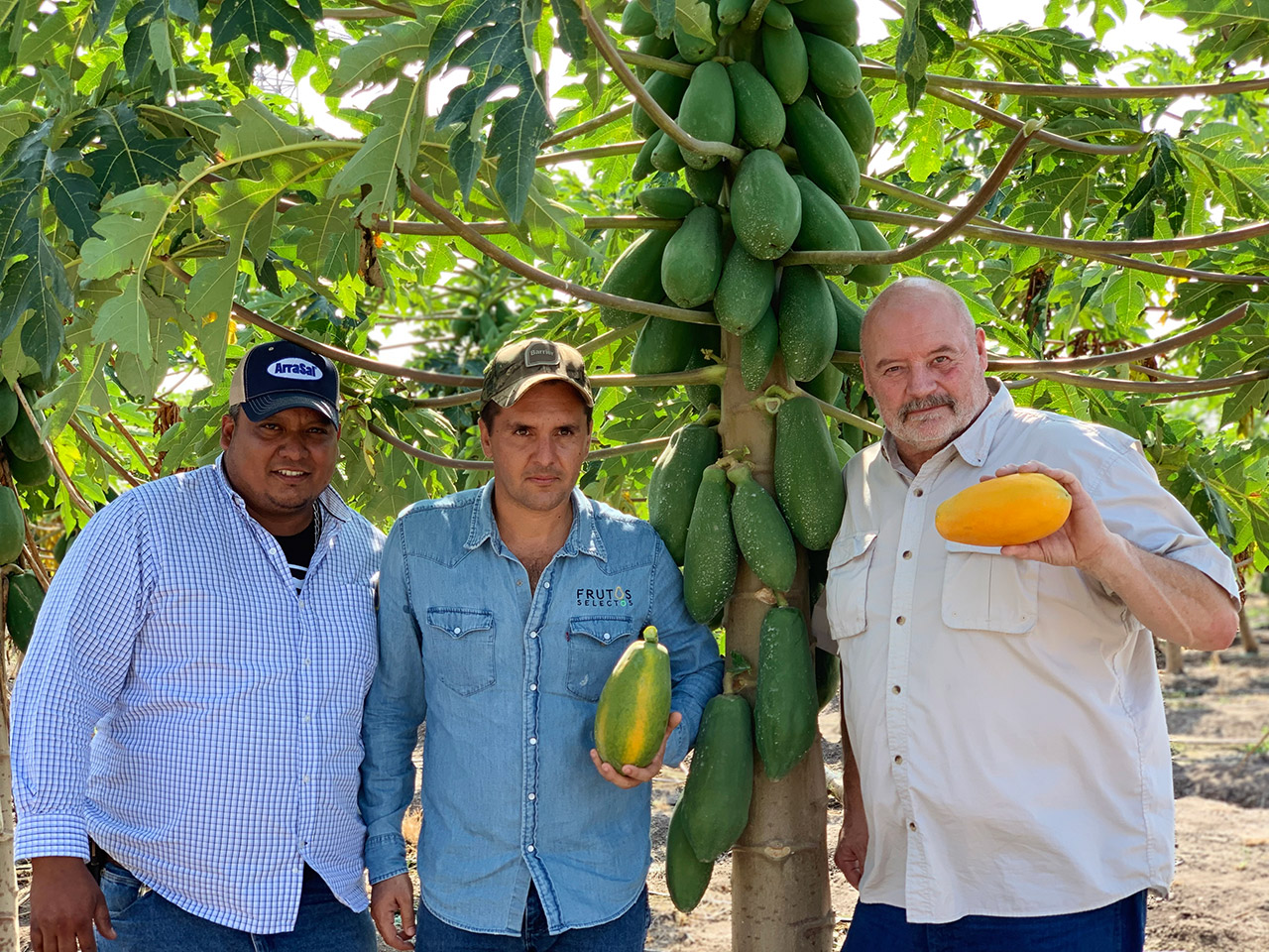 Papaya farmers in Veracruz