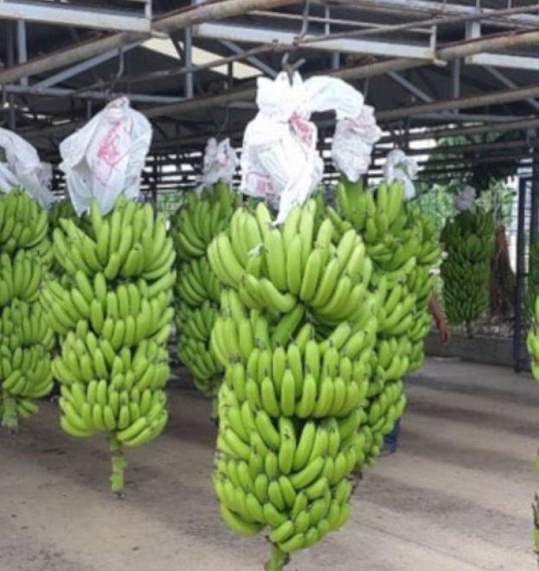 Teapa: Mexico's Banana land